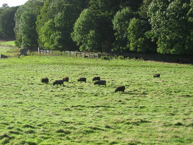 Parkland, Abercorn.