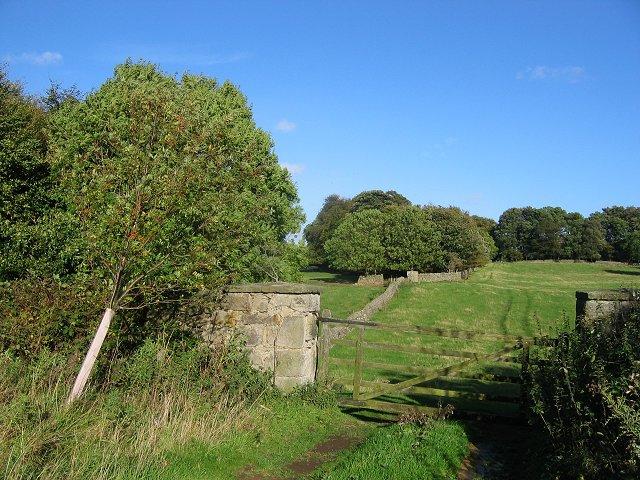 Pasture, Hopetoun.