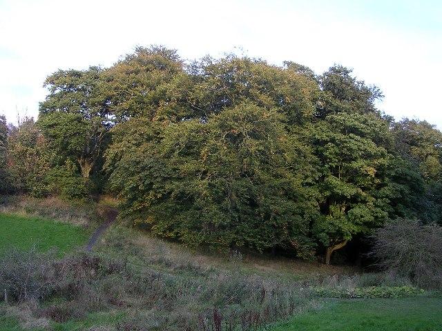 Templehill Wood