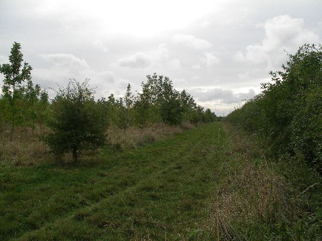 Community woodland at Denchworth.