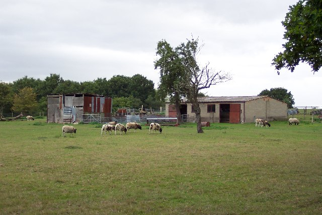 Normandy sheep farm