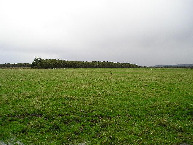 Linwoodmoss Wood