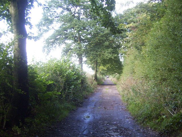 The Lymes Road