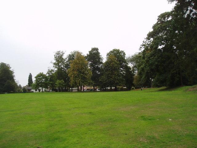 Mature trees at Salmons Lane West, Caterham, Surrey