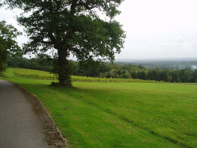 Barnsgate vineyard