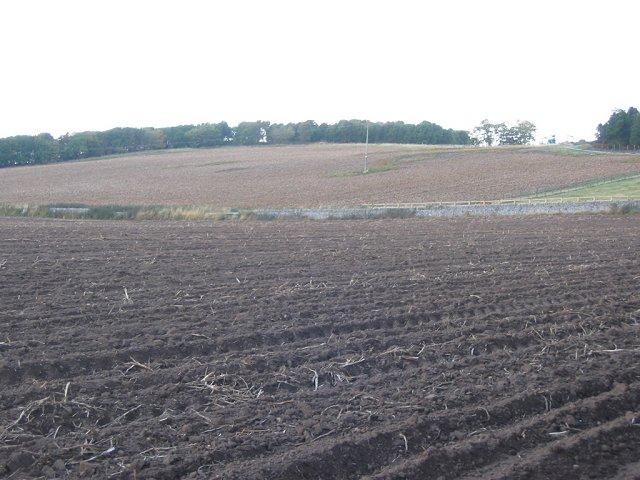 Tattie field, Easter Friarton.