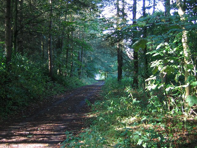 Links Wood.
