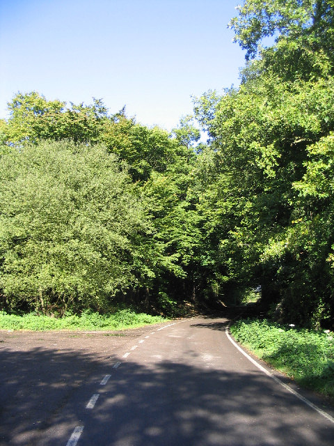 Swan Wood, Stock, Essex
