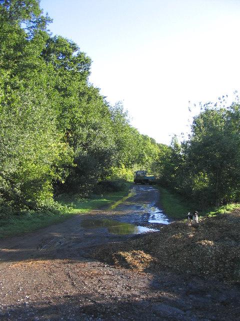 Hall Wood, Ingrave, Essex