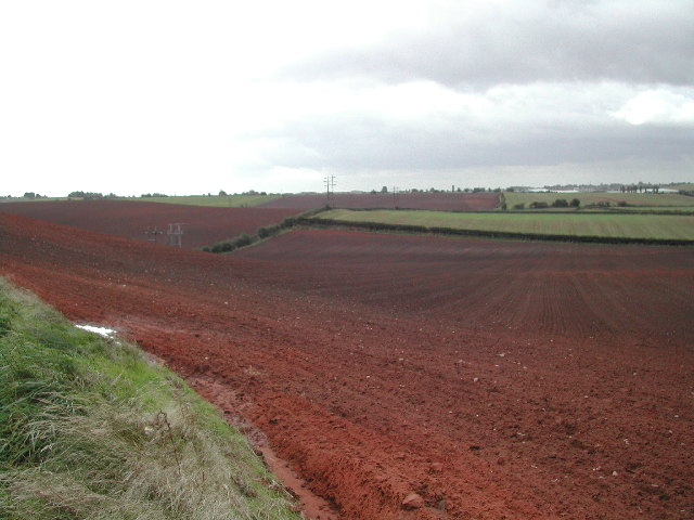 Brown Fields