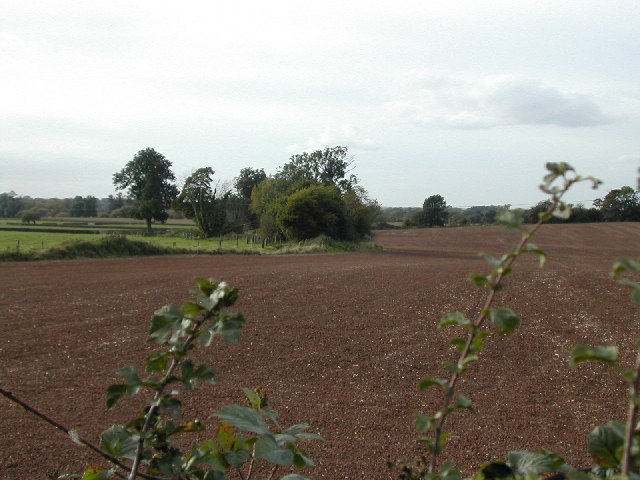 Hedgerows and fields near Newton Solney
