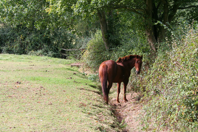 Bicknoller: horse in field