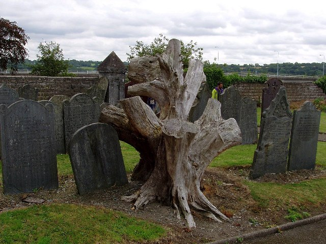 Treestump in St Mary's churchyard