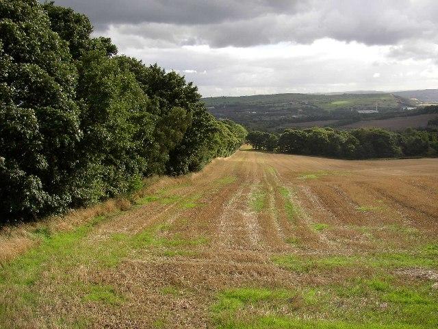 Field in the Kirklees Estate