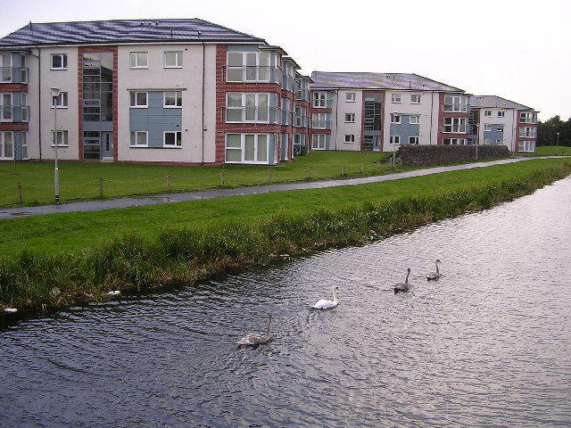Swans on the Forth Clyde Canal