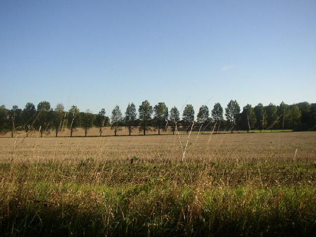 Poplar Route