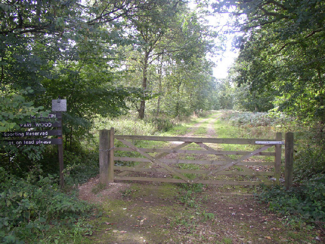 Ditton Park Wood