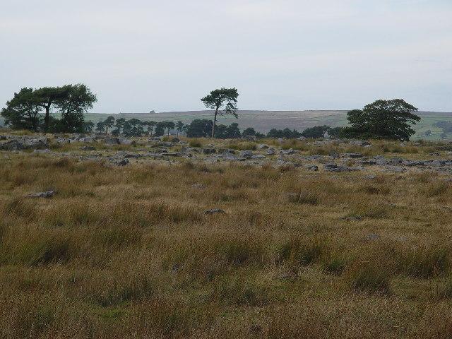 Stony Land