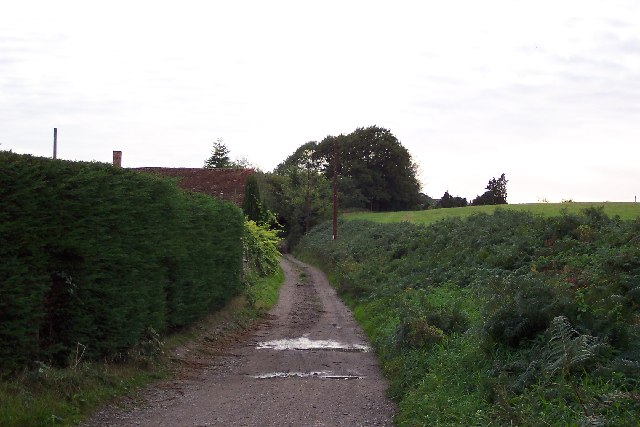 Track at Follyhatch Farm