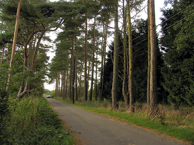 Avenue of Trees at Great Farm