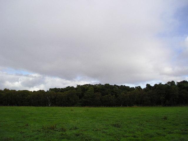 Barochan Moss