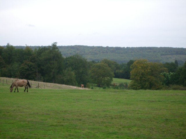 Fields east of Abinger Lane