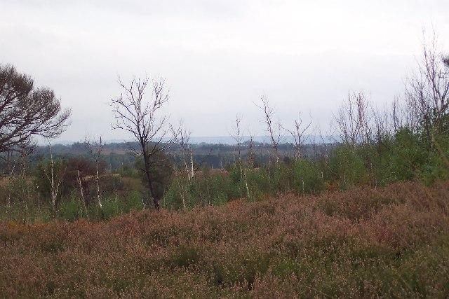 Colony Bog