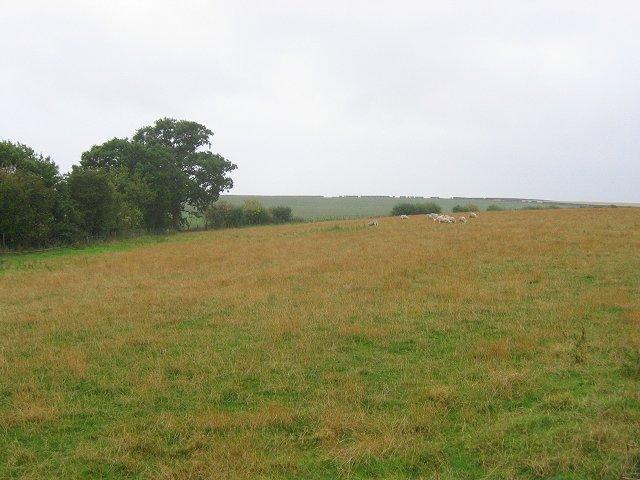 Sheep, Clerkington