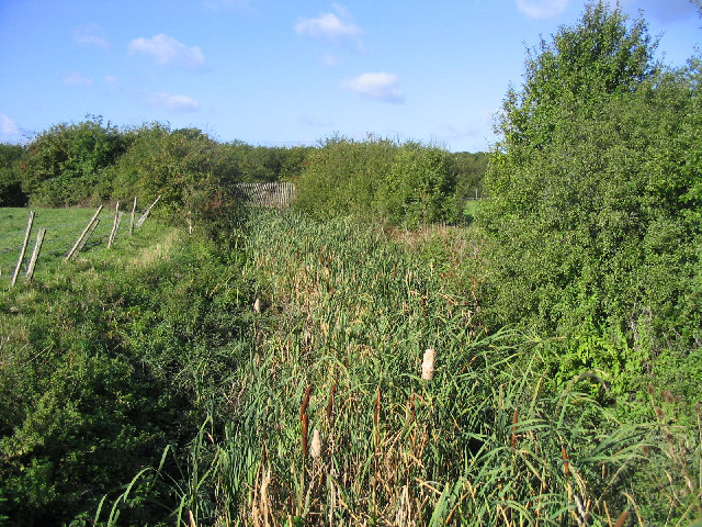 Reed beds, Bury Farm, Upminster