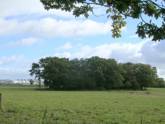 Sandieland Wood near Inchinnan