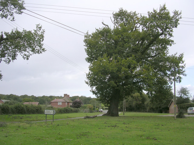 Old oak tree at the Penn Common turning, Bramshaw, New Forest