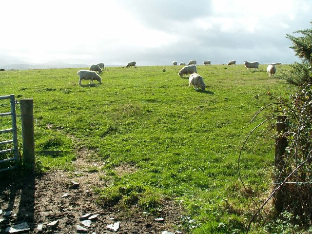 Sheep grazing on gently undulating land near The Dog Mills