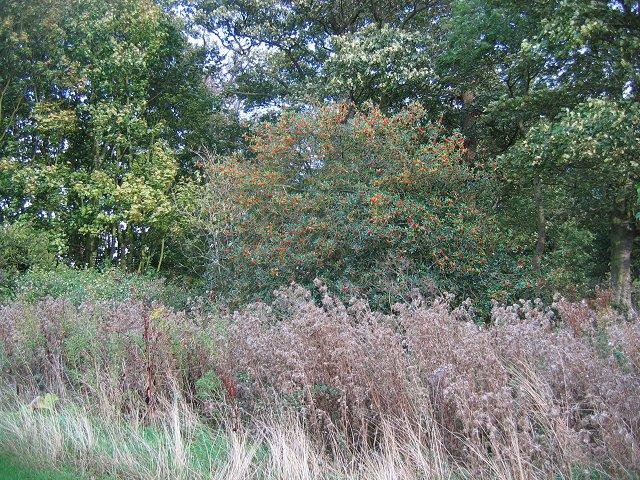 Woodland, Gosford.