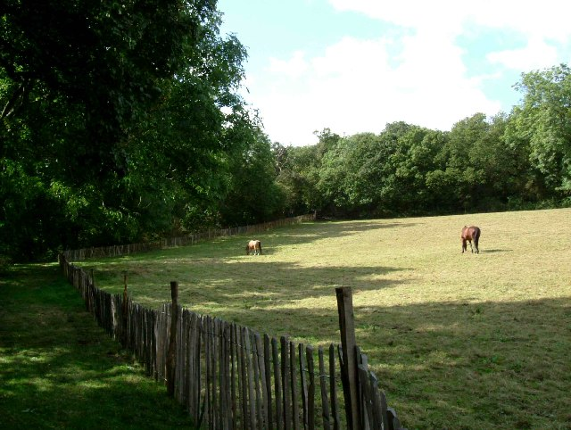 Paddock and Old Hill Wood