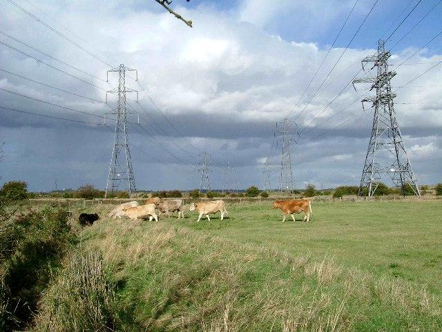 Pasture & Pylons
