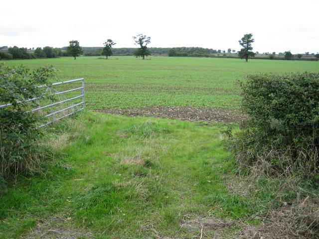 Field, looking west