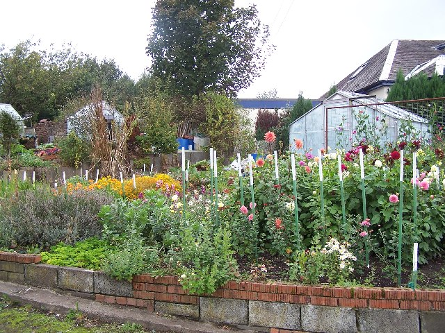 Caddlehill Allotments, Greenock
