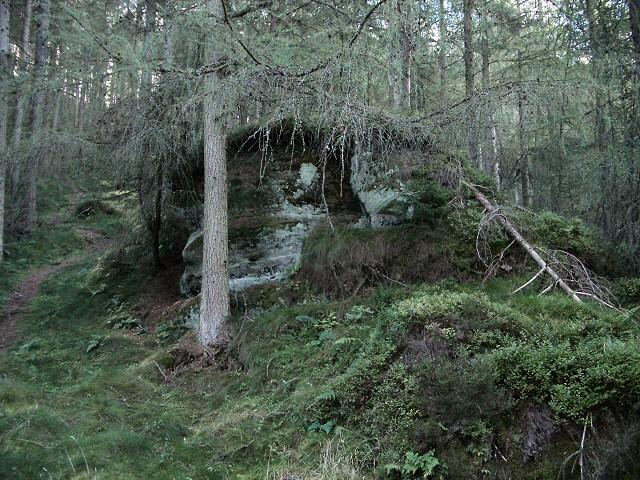 Shadowy woodland