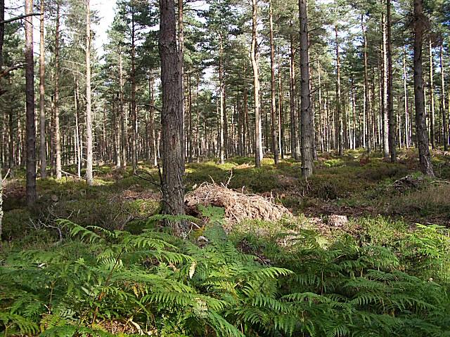 Drumdreel Wood