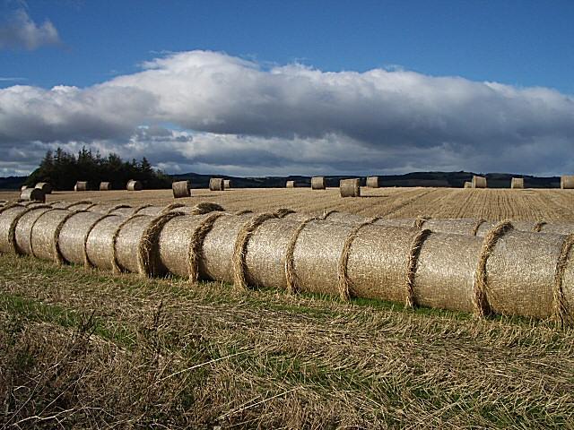 Straw Bales near Strathmiglo