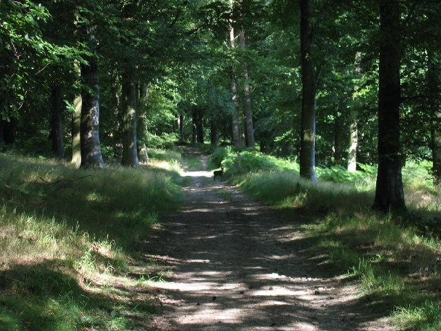 Wapley Hill Wood