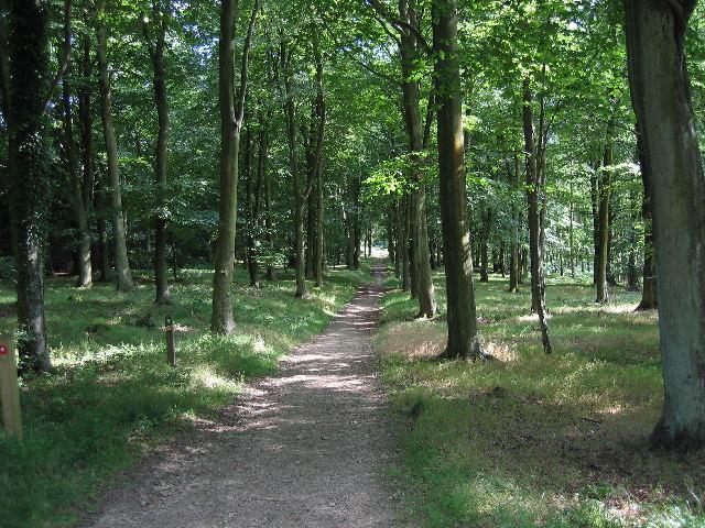 Wapley Hill Wood - Herefordshire Trail