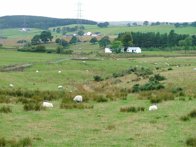 Shotton Moor