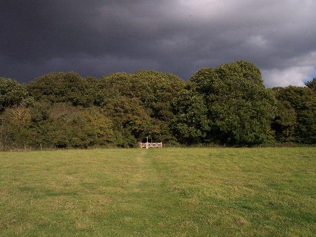 Horton Wood, near Small Dole