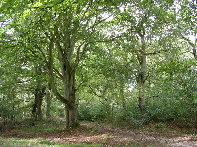 Roydon Woods nature reserve, New Forest
