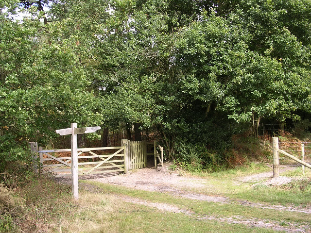 Bridleway junction at the southern edge of Roydon Woods, New Forest