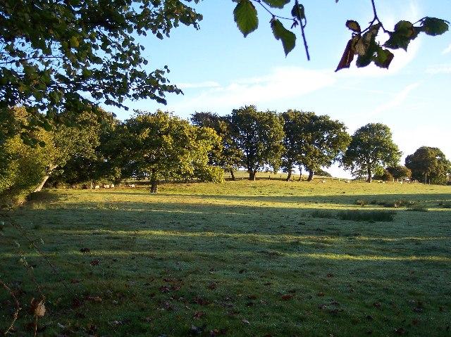 Sheep Pasture near Downer's Vineyard.