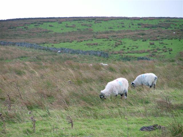 Rough Pasture, Alston Moor