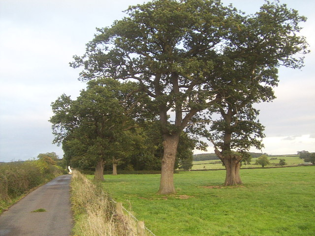 Oak Trees in a Field