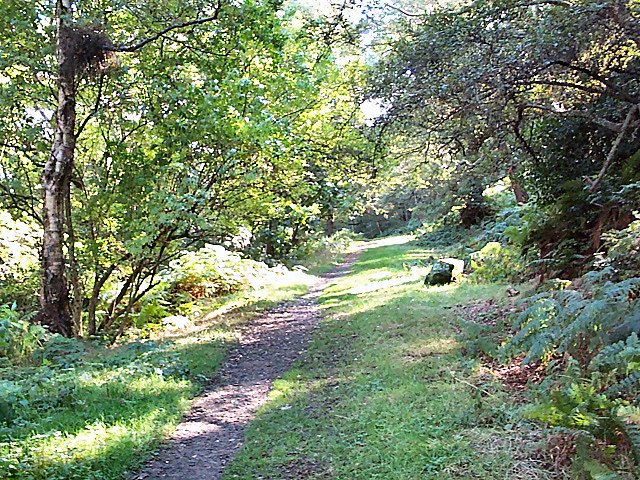 Footpath in Panorama Woods, Ilkley